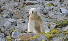 Svalbard Expedition Cruise