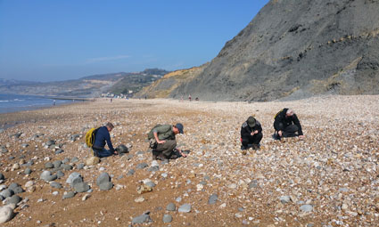 A photgraph of people finding fossils at Lyme Regis on a GeoWorld Travel fossil hunting holiday and fossil trip