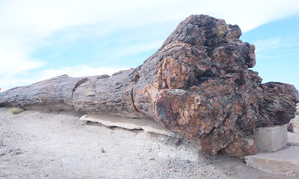 Geology tours featuring Petrified Wood