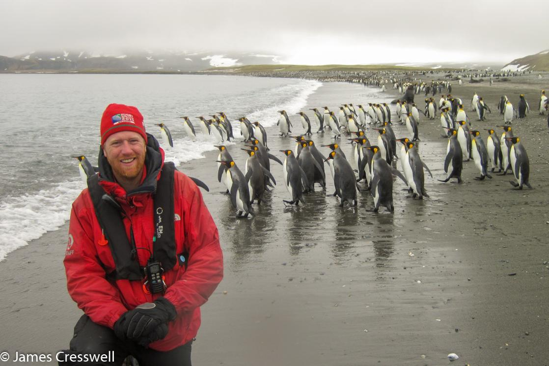 A photograph of James Cresswell with King Penguins in in South Georgia