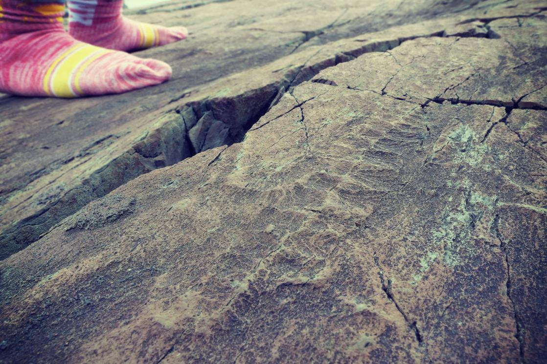 A photograph of an Edicarian fossil at Mistaken Point, taken on a GeoWorld Travel Newfoundland geology trip, tour and holiday